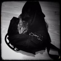 chaton sac