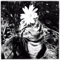 chatonfleur